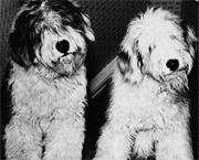 Dogsblog