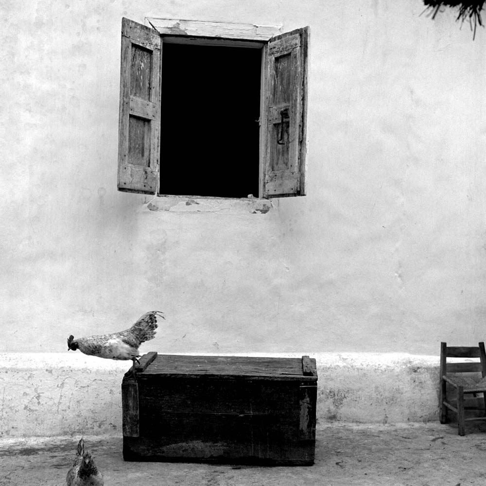 "<span class=""caption-title"">Chicken</span>, La Valle, Haiti, 1982<span class=""caption-copyright"">© Rodney Smith</span>"