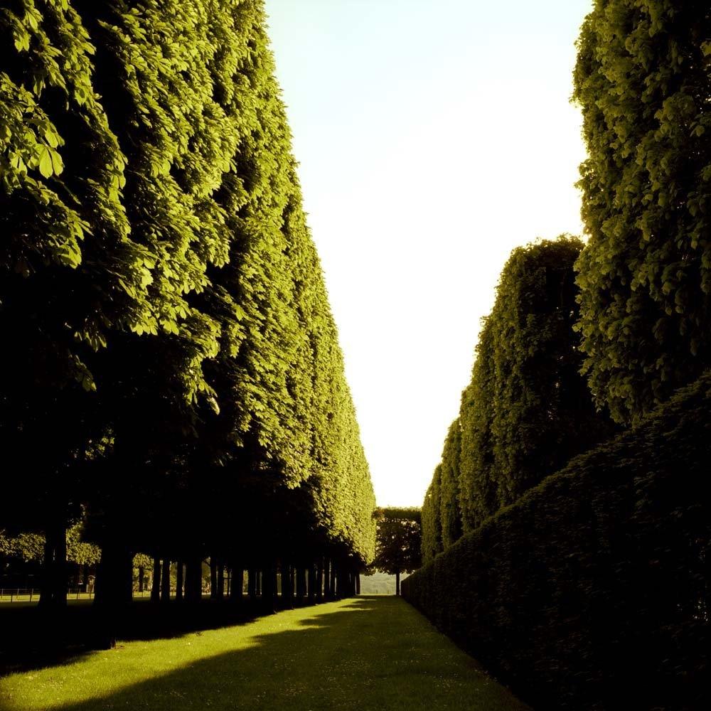 """<span class=""""caption-title"""">Hedges</span>, Parc de Sceaux, Paris, France, 2004<span class=""""caption-copyright"""">© Rodney Smith</span>"""