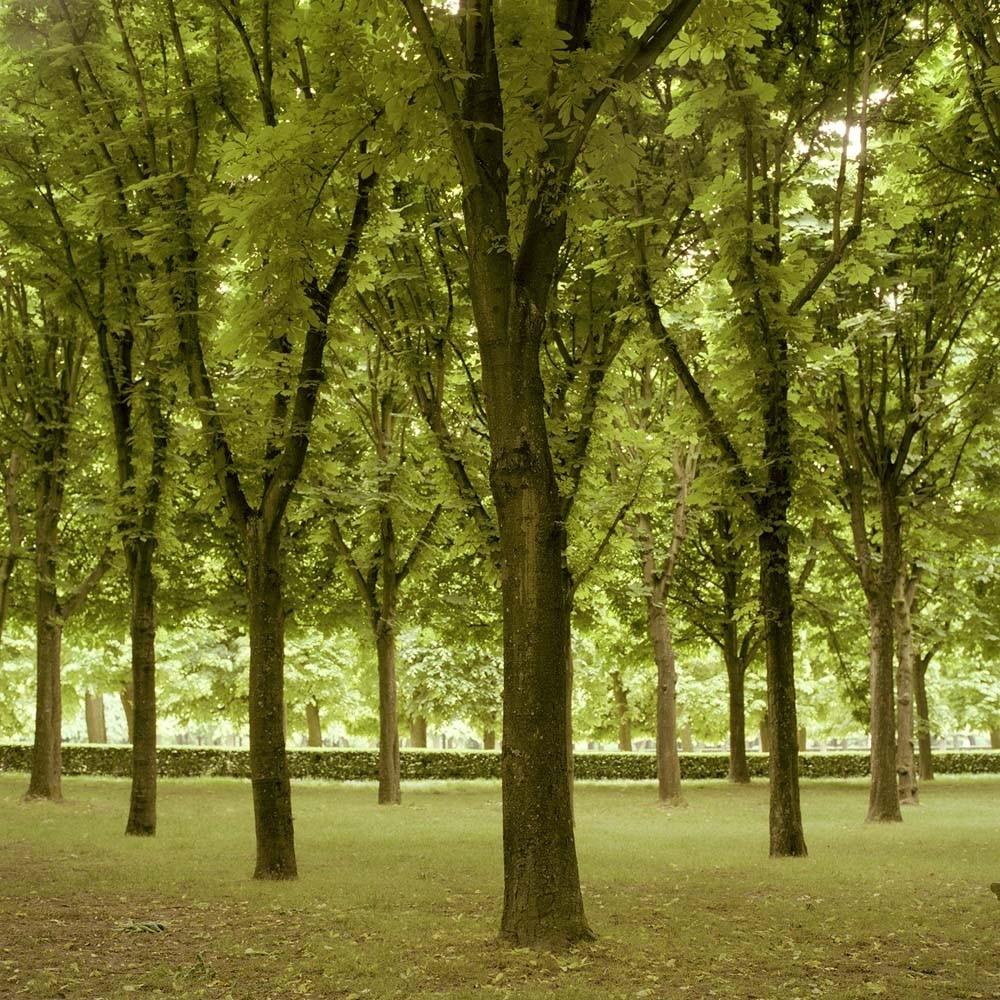 """<span class=""""caption-title"""">Grove</span>, Parc de Sceaux, Paris, France, 2004<span class=""""caption-copyright"""">© Rodney Smith</span>"""