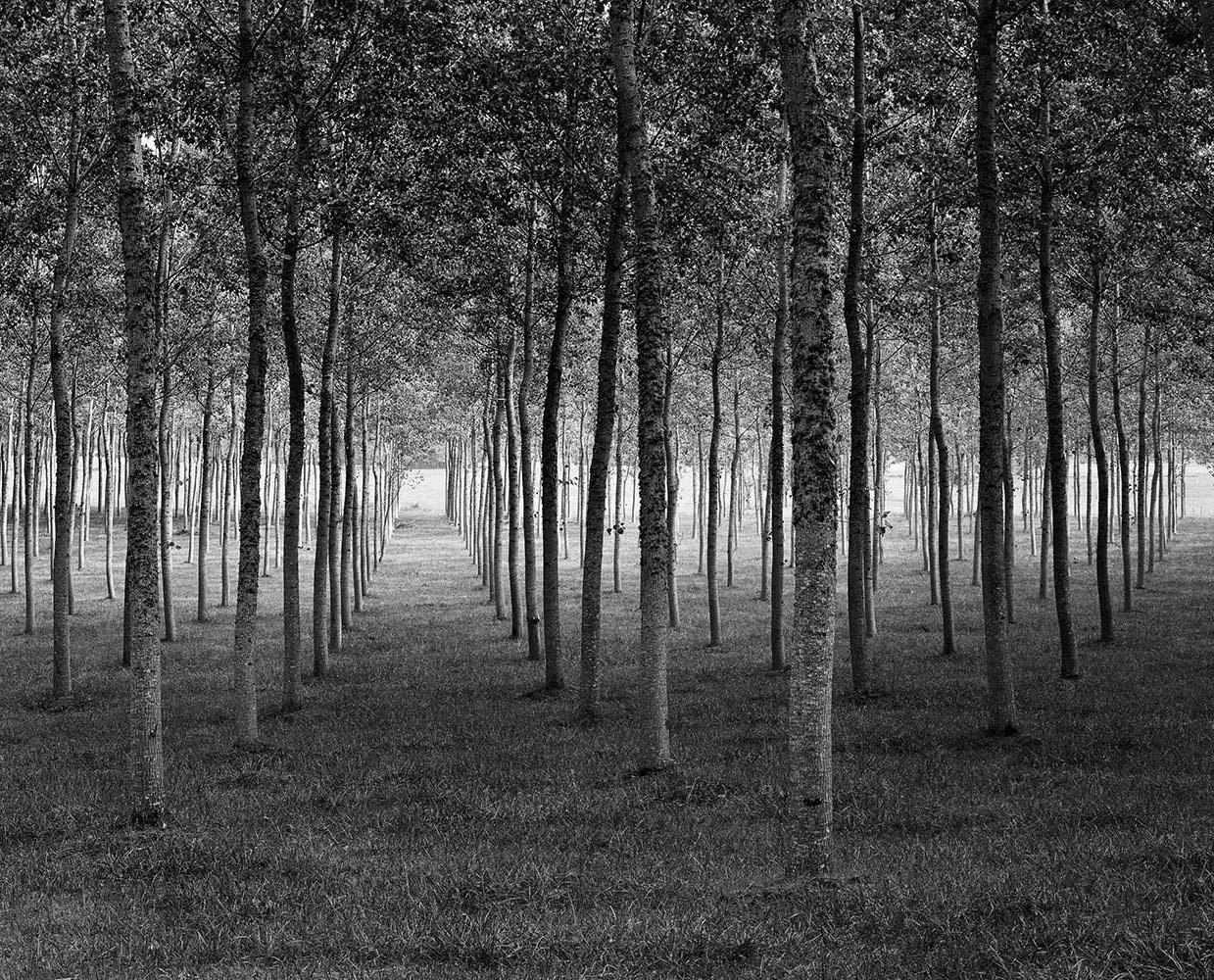 "<span class=""caption-title"">Grove Dordogne</span>, France, 1985<span class=""caption-copyright"">© Rodney Smith</span>"