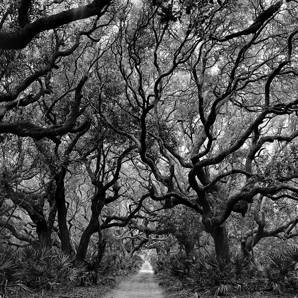 "<span class=""caption-title"">Trees</span>, Cumberland Island, Georgia, 1991<span class=""caption-copyright"">© Rodney Smith</span>"