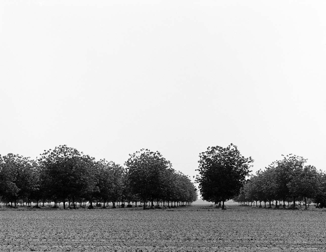 "<span class=""caption-title"">Pecan Grove Shelby</span>, Michigan, 1977<span class=""caption-copyright"">© Rodney Smith</span>"